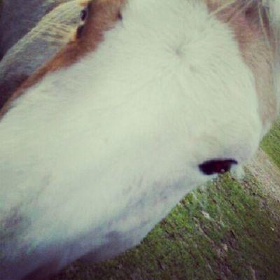 Horses Equus Gelding Palomino Paint