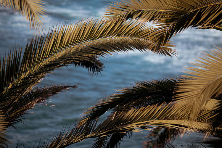 Low angle view of palm tree leaves against sky. tropical summer background. blue sea with palm trees