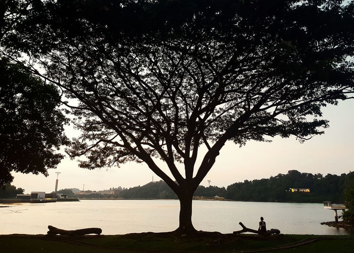 Silhouette tree by lake against sky