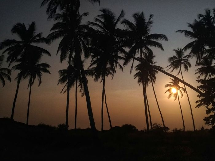 sunset and palm