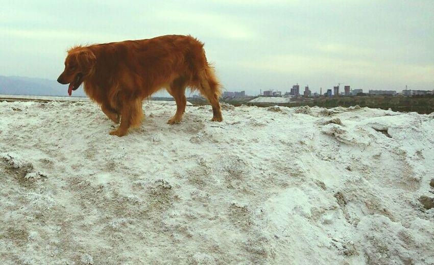 Salt Lake I Love My Dog My Dogs Are Cooler Than Your Kids Enjoying Life
