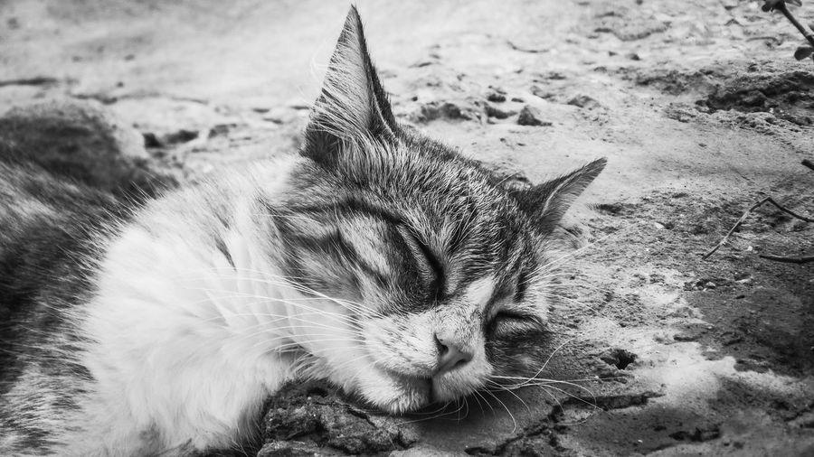 Close-up of cat sleeping on field