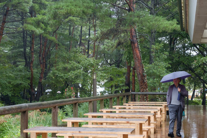 FUJIFILM X-T2 Hitachi Seaside Park HitachiSeaSidePark Japan Japan Photography Fujifilm Fujifilm_xseries Full Length Nature Outdoors Standing Steps Tree Walking X-t2 ひたち海浜公園