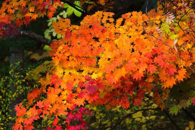 autumn leaves /