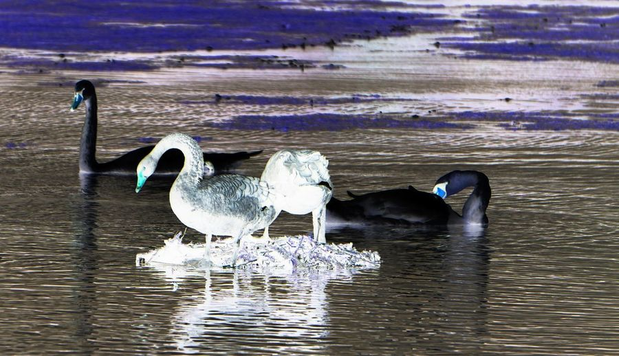 Bird Water Lake