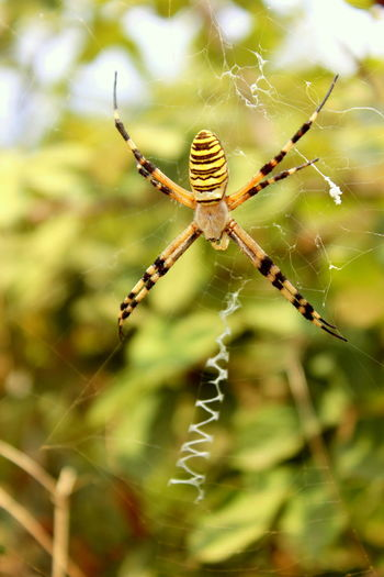 Animal Leg Animal Themes Animals In The Wild Beauty In Nature Bosnia And Herzegovina Close-up Dangerous Exotic Fragility Insect Nature Nature No People One Animal Outdoors Poisonous Rare Spider Spider Web Spiderweb Stolac Survival Venomous Weaving Web