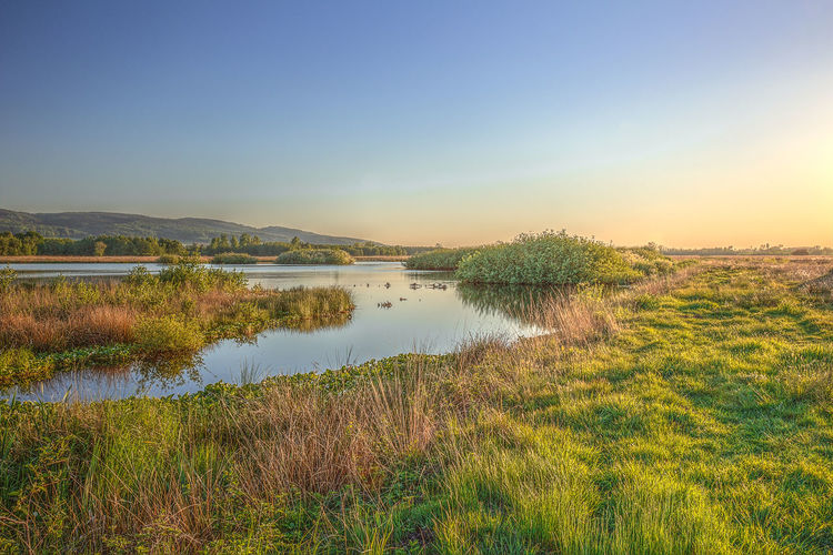Großes Torfmoor in Hille / OWL Water Sky Plant Tranquility Tranquil Scene Beauty In Nature Scenics - Nature Grass Nature Lake No People Reflection Clear Sky Non-urban Scene Land Outdoors Hille