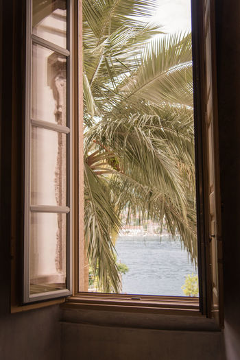 Close-up of palm tree seen through window