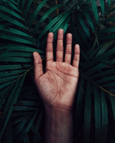 EyeEm Selects Human Hand Palm Fanned Out Black Background Close-up