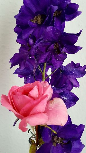 Flower Purple Petal Beauty In Nature Fragility Nature Freshness Flower Head Close-up Pink Color Plant Growth Flowers In A Vase Rose🌹 Rittersporn