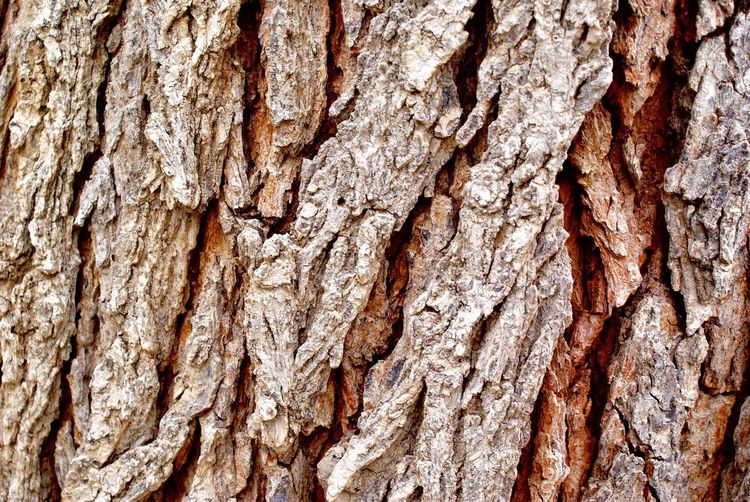 Tree bark Textured  Rough Backgrounds Cracked Tree Trunk No People Close-up Pattern Full Frame Nature Wood - Material Tree Plant Bark Brown Bark Day Outdoors (null)Beauty In Nature Nature Countryside Fall Tree Wood Oxygen