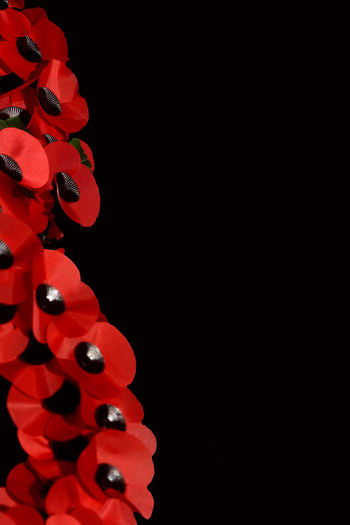 Abstract Remembrance Day Scene Abstract Armistice Day 11th Hour Of The 11th Day Of The 11th Month, 1918 ArmisticeDay Black Background Celebration Close-up Conceptiu Copy Space Creative Creative Light And Shadow Creativity Indoors  Night No People Red Remembrance Day Studio Shot
