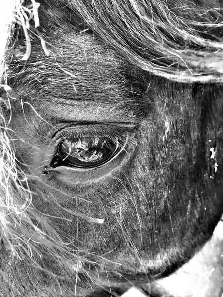 One Animal Close-up Animal Body Part Animal Themes Outdoors Day No People Mammal Nature Domestic Animals Horse Eye