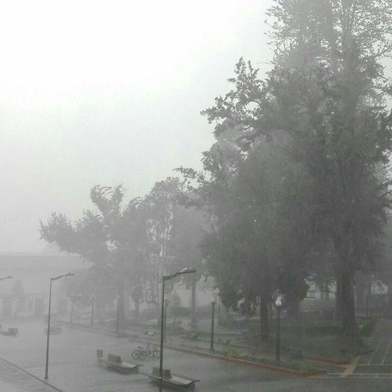 🍃🌧 🌧🌧🌧 Centro Popayán