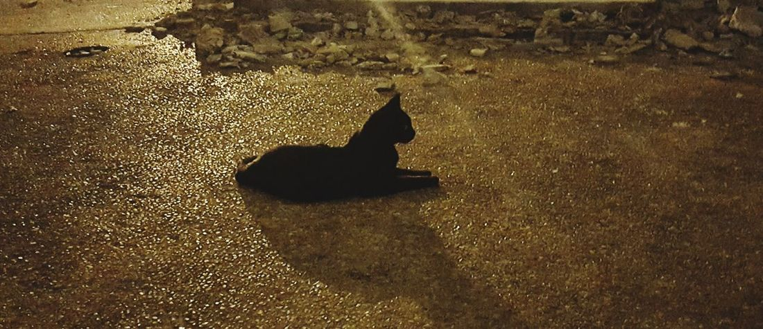 One Animal Animal Themes Domestic Animals Domestic Cat Cat Sphinx Road Outdoors Black Cat TakeoverContrast