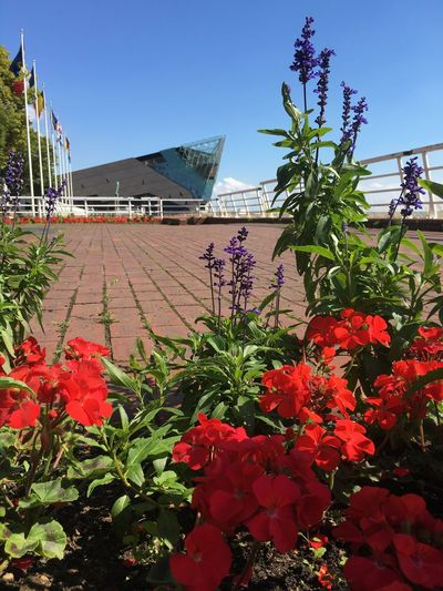Flower Beauty In Nature Architecture In Bloom Hull2017 Hull Marina Hull City Of Culture 2017 Hull Old Town The Deep Hull Pier Geraniums