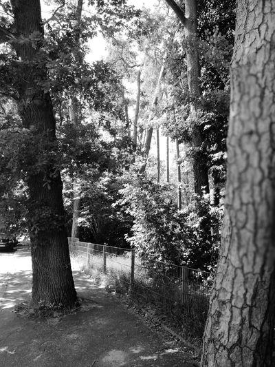 Bodi Lübeck Tree Tree Trunk Plant