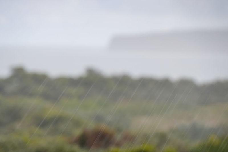 Rain Rainy Days Nature Environment Plant No People Focus On Foreground Motion Selective Focus Wet Cape Bridgewater Victoria
