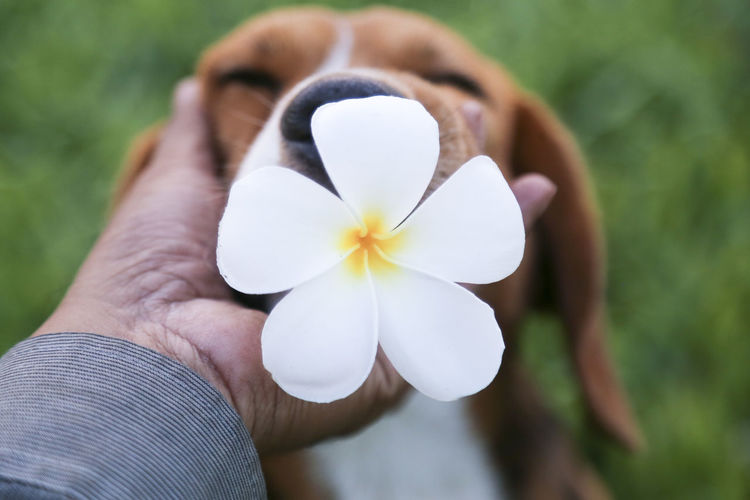 Cropped hand touching dog with flower