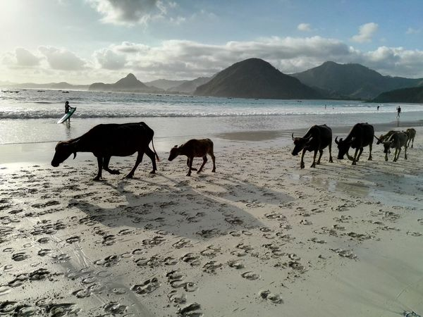 Be. Ready. Selong Belanak, Lombok Selong Belanak Beach Animal Landscape Sea Beach Bufalo INDONESIA Indonesia Scenery Hawei P8 EyeEmNewHere