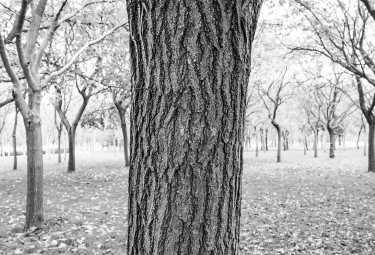 Time makes us stronger Beauty In Nature Black & White Black And White Branch Close Up Nature Day Forest Growth Landscape Minimal Minimalism Nature No People Outdoors Park Scenics Tranquil Scene Tranquility Tree Tree Trunk