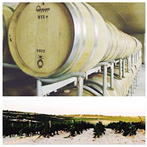 Wine Wine Tasting Winery Red Wine Wine Time Winelover Winecountry Wine Bottles Winehouse