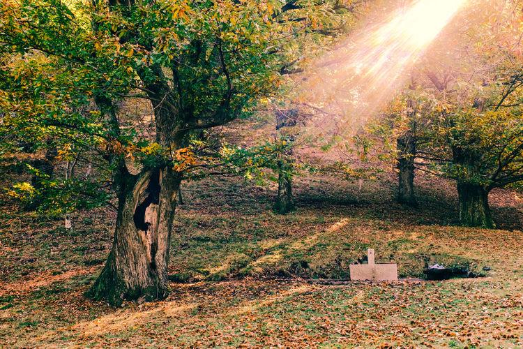 Autumn Autumn Collection Autumn Colors Autumn Leaves Autumn2015 Autumn🍁🍁🍁 Herbstplanschbecken Herbstsonne Herbstspaziergang Herbststimmung Pi Sun Swizterland Ticino