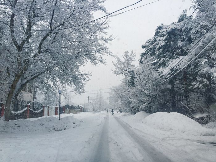 Tree Snow Cold Temperature Winter Transportation Plant Road Sky Covering No People The Way Forward Nature Direction Day Diminishing Perspective Beauty In Nature Frozen Car White Color Outdoors