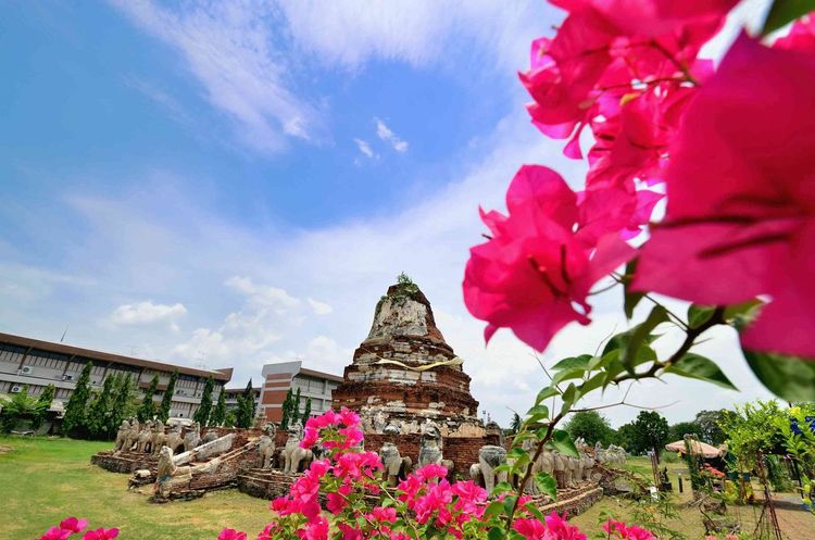 ayuthaya thailand Flawer