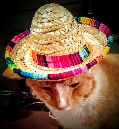 My cat in a hat