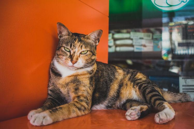 Portrait Of Cat Sitting On Orange Container