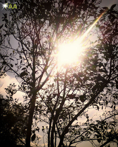 Beauty In Nature Branch Bright Day Growth Low Angle View Nature No People Outdoors Scenics Silhouette Sky Sun Sunbeam Sunlight Tranquility Tree
