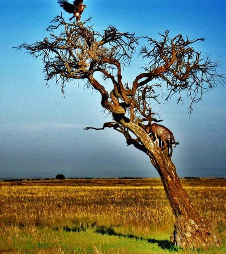 Kenya Bird Meets Cat Nature_collection EyeEmNewHere