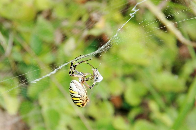 Spider Trapped Animal Leg Web Full Length Insect Spider Web Spider Survival Intricacy Complexity Arachnid Cocoon Spinning