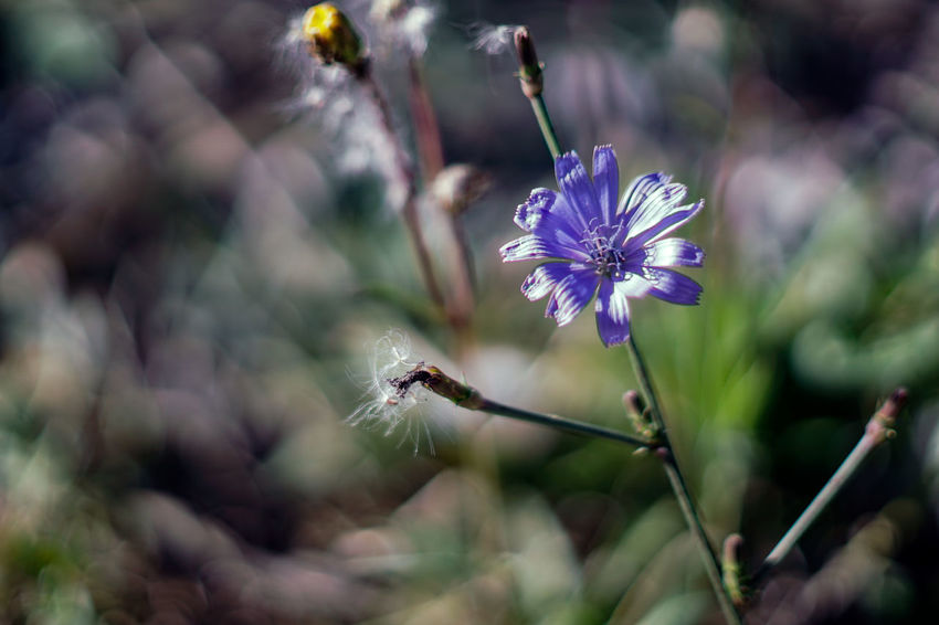 Flowering Plant Flower Plant Fragility Freshness Growth Beauty In Nature Vulnerability  Flower Head Close-up Petal Nature Purple Inflorescence Focus On Foreground No People Day Plant Stem Selective Focus Outdoors Pollen Pollination