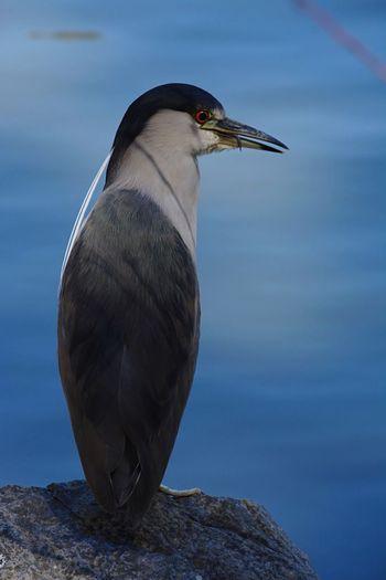 Animal Themes Animal Wildlife Bird Animal Animals In The Wild One Animal Vertebrate Nature Beauty In Nature Water