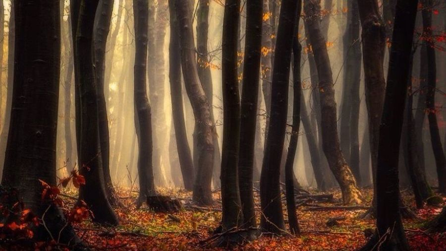 Mistery Forest