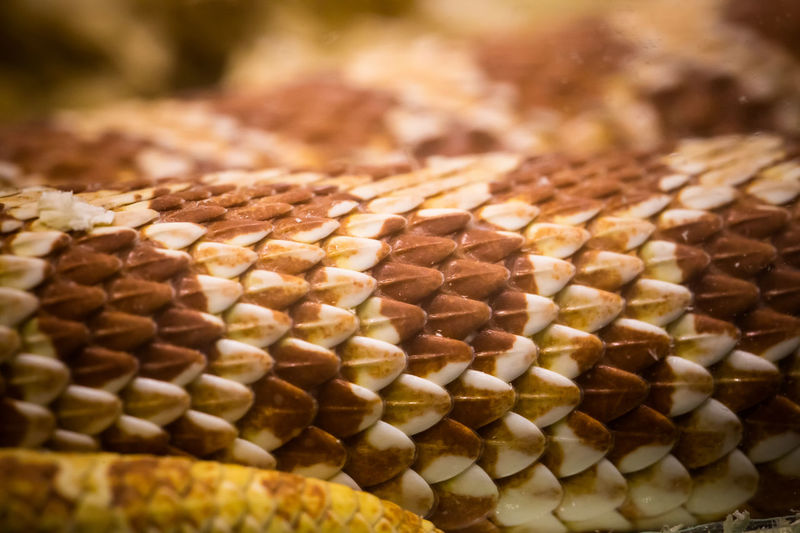 Brown Close-up EyeEm Full Frame Indoors  No People Scales Snake Snake Scales