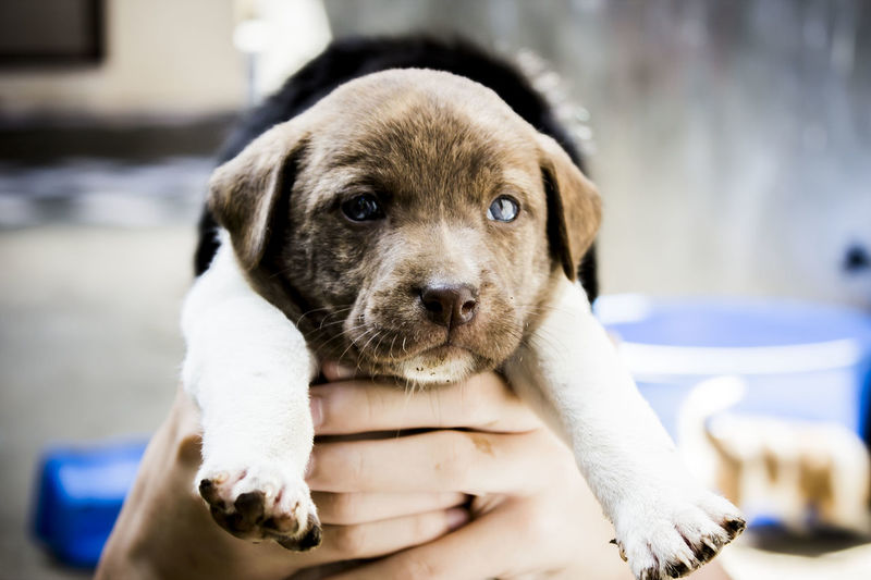 #puppy #Puppy Love Animal Themes Close-up Day Dog Domestic Animals Focus On Foreground Human Hand Looking At Camera Mammal One Animal One Person Outdoors Pets Portrait Real People Fresh On Market 2017