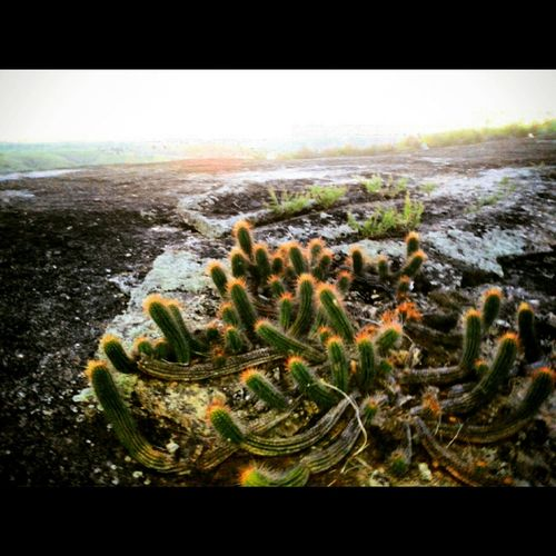 Cactus Cactus Flower Taking Photos Naturelovers Nanuque-Mg Culture Love It