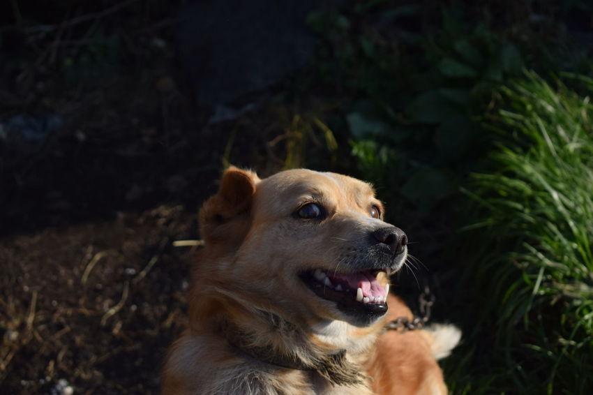 Dog Dogs Looking One Animal подозрительность радость собака собачка
