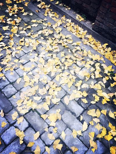 Cobblestone Autumn No People Leaf Change Yellow Outdoors Day Large Group Of Objects Nature Backgrounds Close-up
