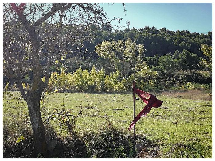 Tree Sky Grass