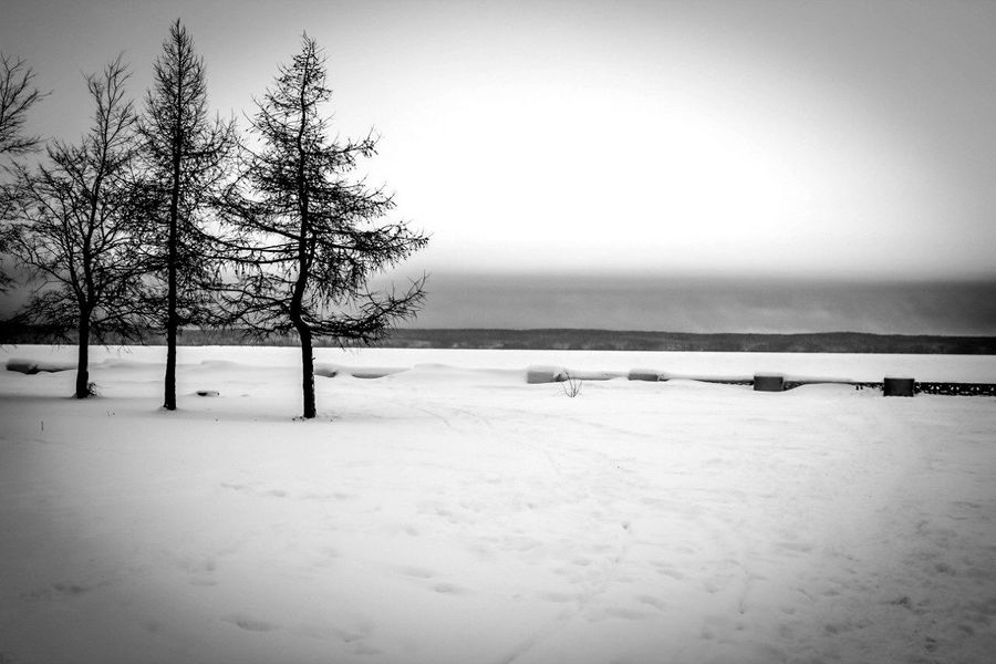 Winter Snow Day Tree No People Nature Karelia Cold Temperature Beauty In Nature Karelian Nature