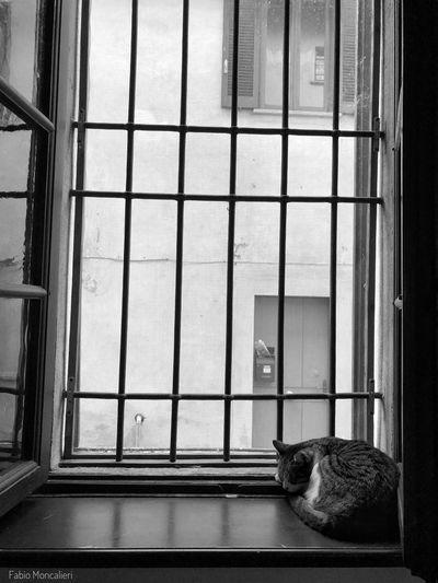 Il riposo del guerriero #blackandwhite #gatti#chats#cats #animal #cat First Eyeem Photo EyeEmNewHere