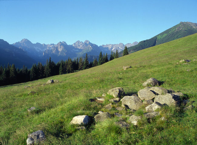 Rusinowa Polana, Tatry, Poland Beauty In Nature Day Field Fields Landscape Meadow Mountain Mountain Range Mountains Nature No People Outdoors Poland Polen Rusinowa Rusinowa Rusinowa Polana Stone Stone Material Tatry