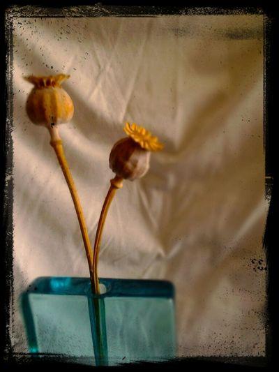Poppies !