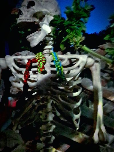 I'm bone-a-fied gorgeous with a little color! Bones Skeleton Bone-a-fied Gorgeous Halloween Skull Spirit EyeEm Selects Ghost Haunt