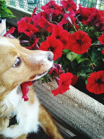 Flower Domestic Animals Red One Animal Nature Tree Photography Dog Love Dogs Of EyeEm Dogsofinstagram Dog Lover Dog Life Dogoftheday Dogs Life Dogmodel Flower Photography Flowerphotography Papaveri Insect Inside Red Flowers