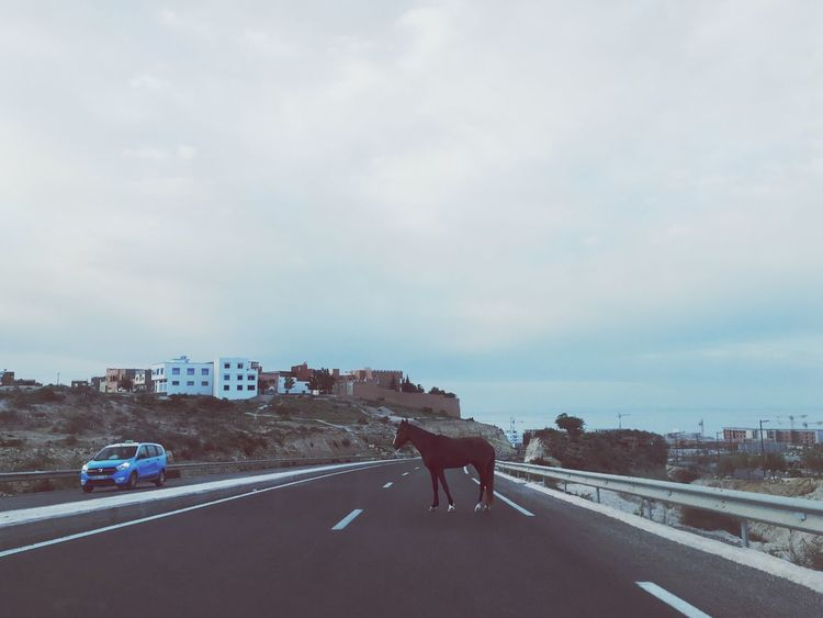 Horse on a road Fun Adventure Travel High Way Animal Horse Road Sky Architecture Transportation Built Structure Cloud - Sky Car Outdoors City